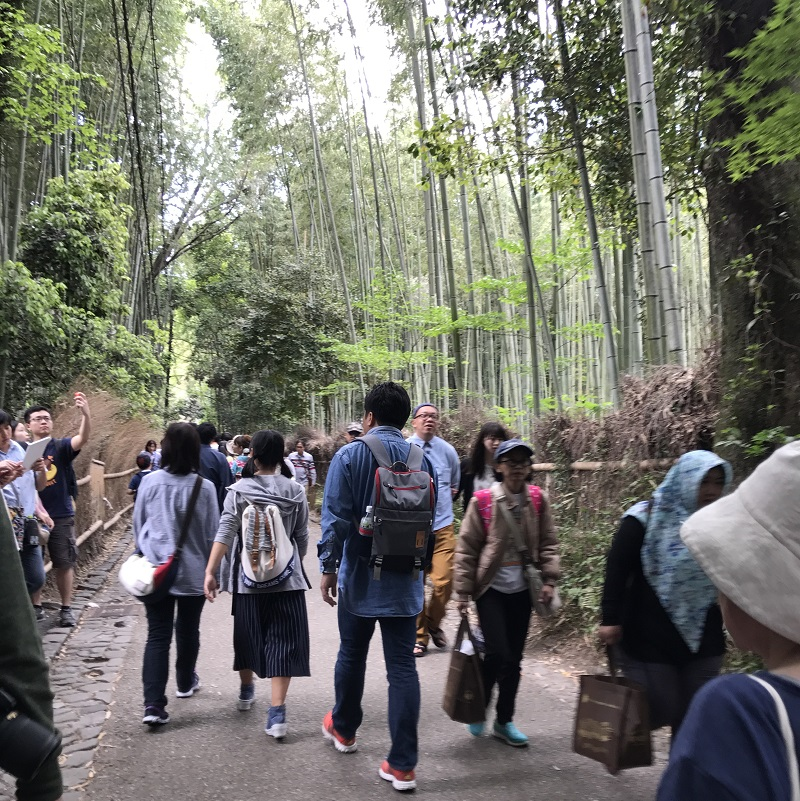 Bamboo forest with people.jpg